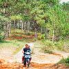 riding in the pine jungle
